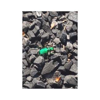 Green Beetle Canvas Print