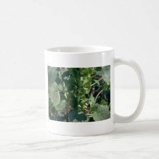 Green Bells Of Ireland Moluccella Laevis flowers Mugs