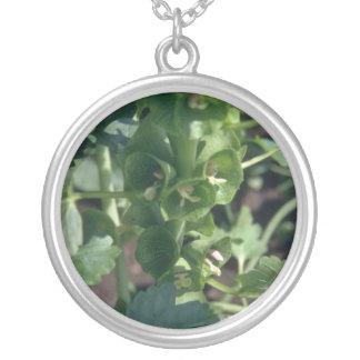 Green Bells Of Ireland (Moluccella Laevis) flowers Round Pendant Necklace