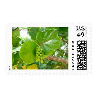 Green Berries Stamp