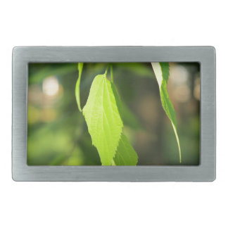 Green birch branch with leaves rectangular belt buckle