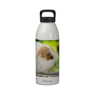 green bird and guinea pig in has spring garden drinking bottle