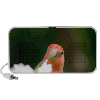 green bird fun mp3 speaker