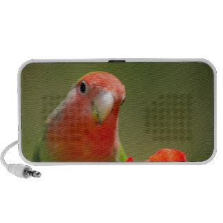 green bird fun notebook speakers