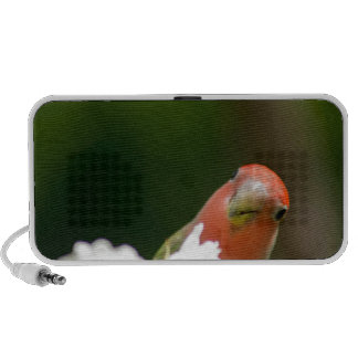green bird fun travel speaker