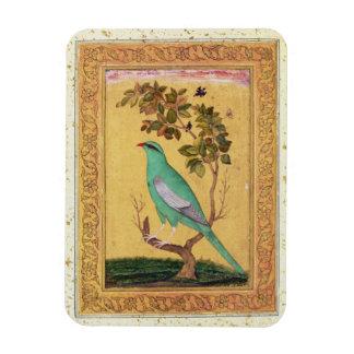 Green Bird, Mughal (gouache on paper) Vinyl Magnet