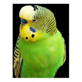 """""""Green bird"""" Postcard"""