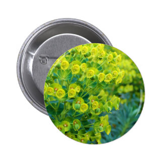 Green bloom pinback button
