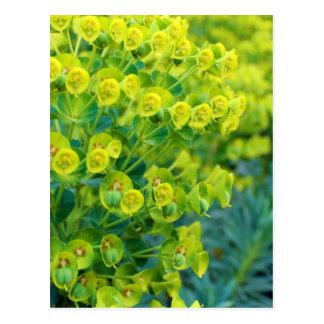 Green bloom postcard