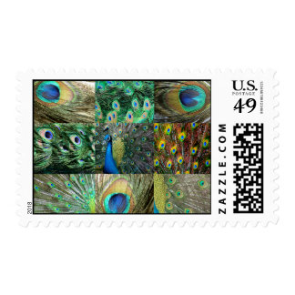 Green Blue Peacock photo collage Postage Stamp