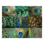 Green Blue Peacock photo collage Poster