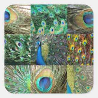 Green Blue Peacock photo collage Square Sticker