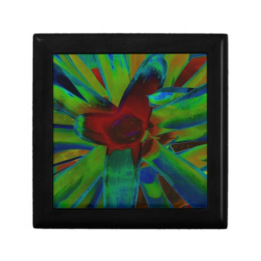 Green Blue Red Bromeliad Plant Image Gift Boxes