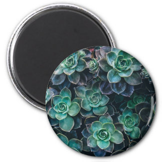 Green Blue Succulent Plants Magnet