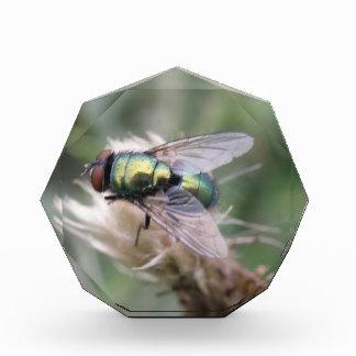 Green Bottle Fly Macro Decorative Acrylic Award