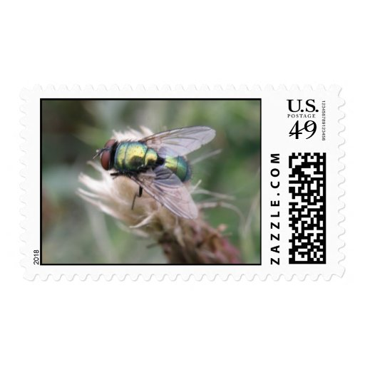 Green Bottle Fly Macro Postage Stamp