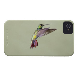 Green-breasted Mango Hummingbird Anthracocorax 2 iPhone 4 Case-Mate Case