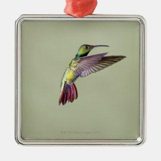 Green-breasted Mango Hummingbird Anthracocorax 2 Metal Ornament