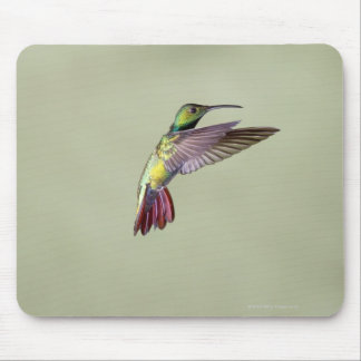 Green-breasted Mango Hummingbird Anthracocorax 2 Mouse Pad