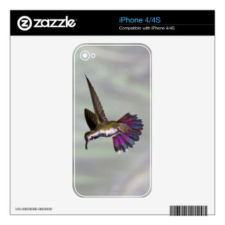 Green-breasted Mango Hummingbird Anthracocorax 3 Skins For iPhone 4S