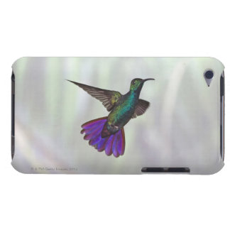 Green-breasted Mango Hummingbird Anthracocorax Case-Mate iPod Touch Case