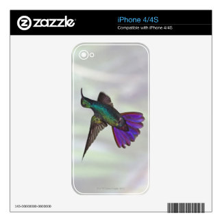 Green-breasted Mango Hummingbird Anthracocorax iPhone 4 Decal
