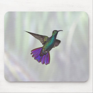 Green-breasted Mango Hummingbird Anthracocorax Mouse Pad