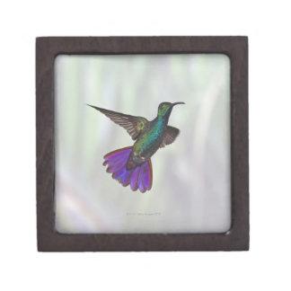 Green-breasted Mango Hummingbird Anthracocorax Premium Jewelry Box