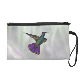 Green-breasted Mango Hummingbird Anthracocorax Wristlet Clutch