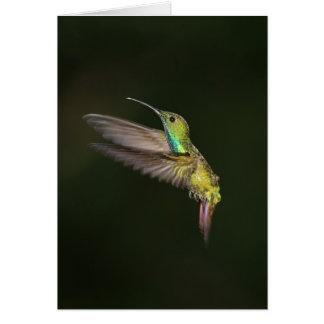 Green-breasted Mango male Card