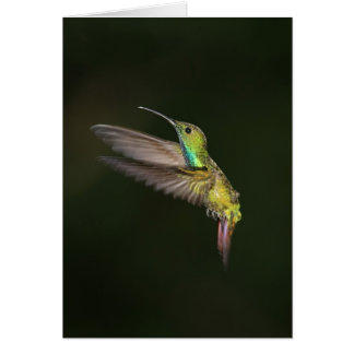 Green-breasted Mango male Greeting Cards
