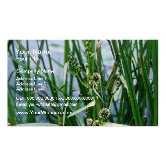 Green Broad-Fruited Bur-Reed (Sparganium Eurycarpu Business Cards