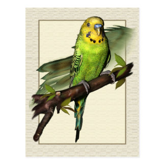 Green Budgie Art Postcard