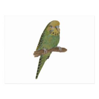 Green Budgie Art Post Cards