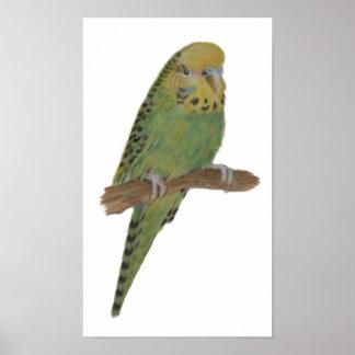 Green Budgie Art Print