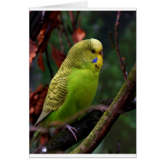Green Budgie Greeting Cards