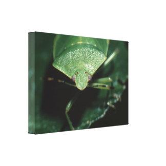 green bug canvas print