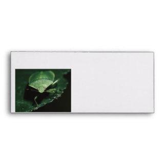 green bug envelope