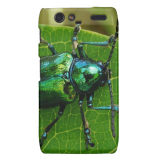 Green bug on green leaf droid razr covers