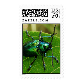 Green bug on green leaf postage