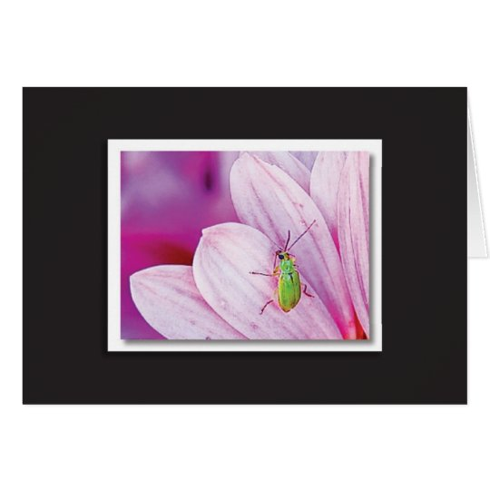Green Bug on Pink Petals Card