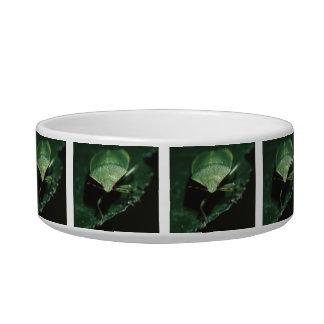 green bug cat bowl