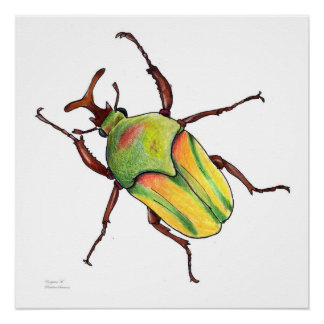 green bug poster
