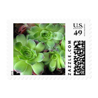 Green Burgundy Succulent Plants Postage Stamps