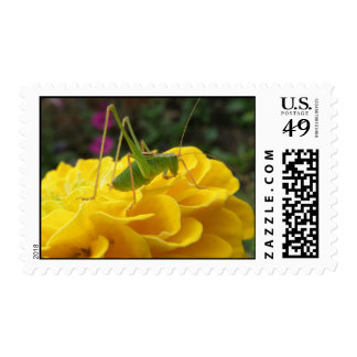 Green Bush Cricket and Zinnia US Postage Stamp