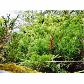 Green Bush Acrylic Cut Outs
