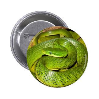 Green Bush Rat Snake Button