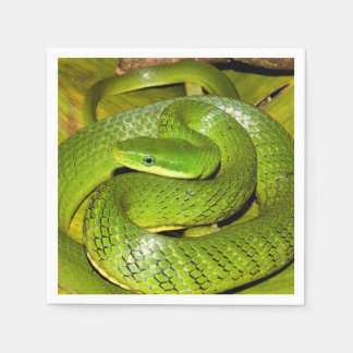 Green Bush Rat Snake Napkin