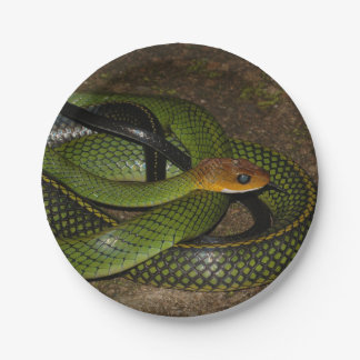 Green Bush Rat Snake Paper Plate