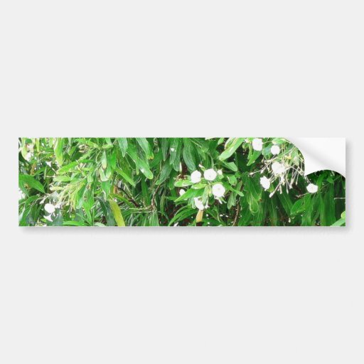 Green Bush With White Flowers Bumper Stickers